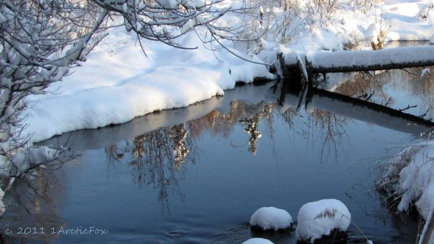REFLECTION OF WINTER BEAUTY by 1arcticfox