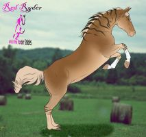 WPY Red Ryder For Sale by Equinera