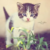 my adorable kitten by Dina90T