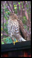 Perch for a Hawk 2 by Frostola