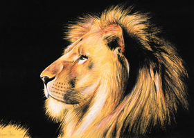 Lion Drawing Tone Paper by darrenOhhh