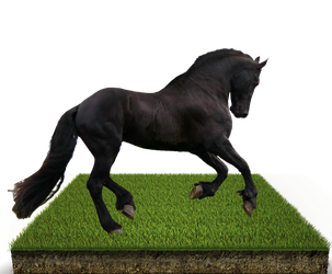 Grass Patch Horse PSD by wsaconato