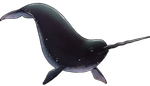Black Narwhal Companion by TokoTime