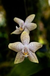 MOBOT: 2011 Orchid Exhibit III by breaking-reality