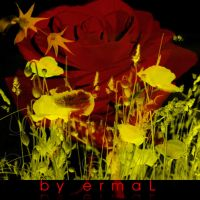 Floral Brushes by by-ermal