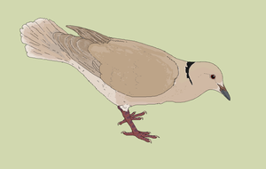 Daily Drawing #2 (9-6-17) Ringneck Dove by Sheather888