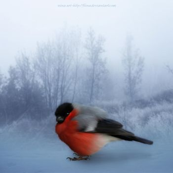 Bullfinch by flina