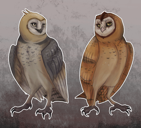 bros before lesser owl species amiright guys by terostrix