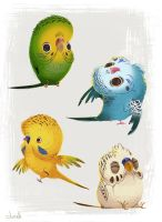 Parakeets by doingwell