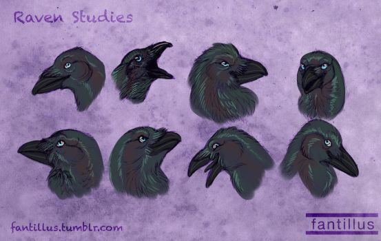 Raven Studies by Fantillus