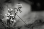 black and white by negriis