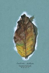 Project . Leaves . xi by dasidaria-art