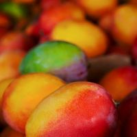 Mangoes by shakti-anishka