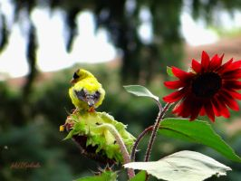 Bird and Sunflowers.... by gintautegitte69