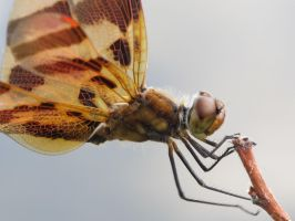 Halloween Pennant 5 by Windthin