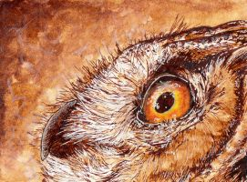 Coffe Owl ACEO by SargasSall