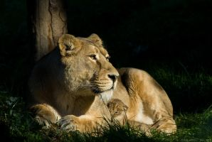 Asha and Cub 18-108 by Prince-Photography