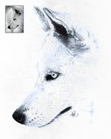 Snow wolf drawing by mezwik