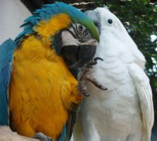 Parrots by Sayrel