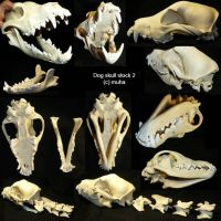 dog skull stock 2 by m-u-h-a