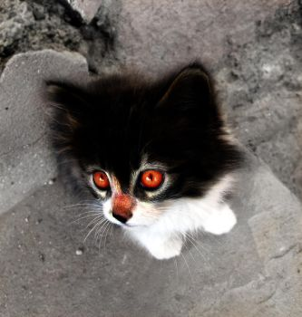 Angry cat by 1337monkeY