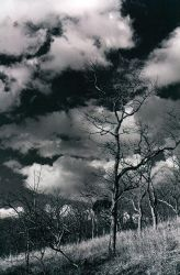 glade tree by zsazs