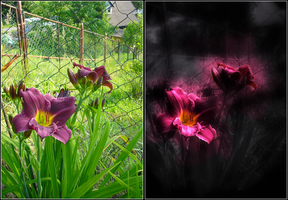 Violet lily (compare) by Destinaetus