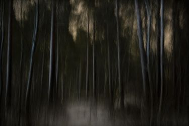 Nocturnal ballad in the woods by StephanePellennec