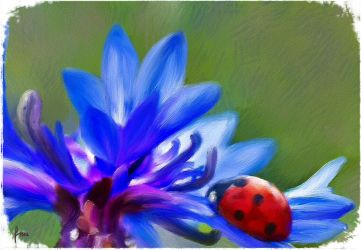 Cornflower and Ladybird by fmr0