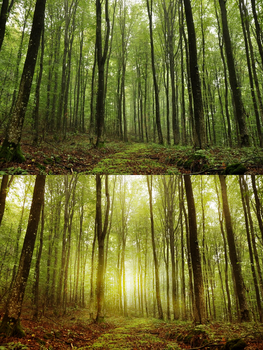 Forest retouch by SatelliteAlice