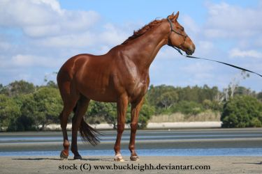 Chestnut standing stock by buckleighh