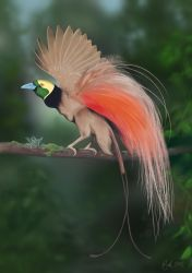 Raggiana Bird of Paradise (Photoshop Painting) by Rick-Lilley