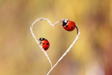 nature love by lisans