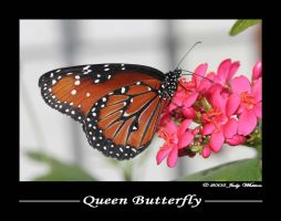 Queen Butterfly by Tazzy-