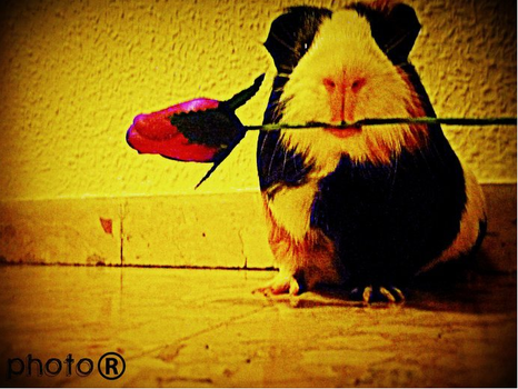 .::A rose for you::. by Habbita