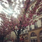 Parisian Beauty by SlytherinsHeiress