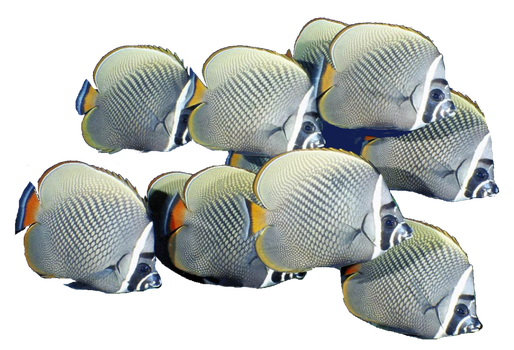 School of Fish png by mysticmorning