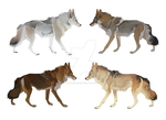 Coyote Colors by witherlings