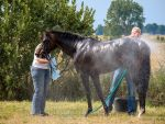 Everyday Stock - Bathing a race horse by LuDa-Stock