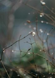 Drops by Anlin
