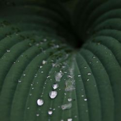 leaf and drops by Nivelis
