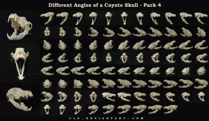 Different Angles of a Coyote Skull Pack 4 by AshenCreative
