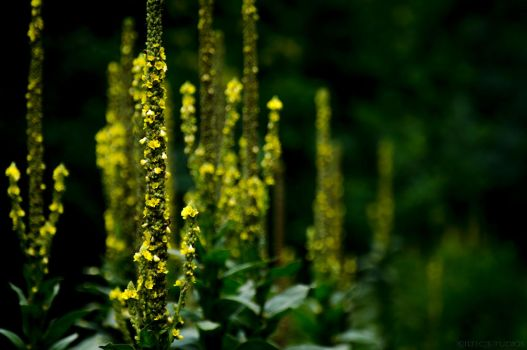 Yellow-Flower-Tall-Things by kiltic