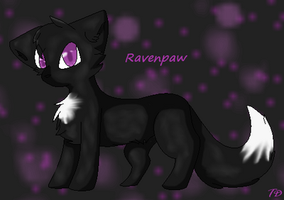 Ravenpaw by TransparentDragon