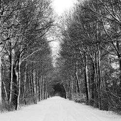 go out for a walk by augenweide