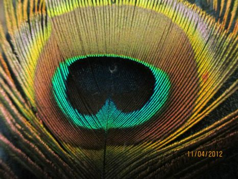 Peacock Feather by MissInglis