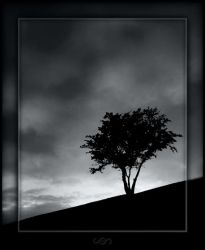 The Thieving Tree by mental