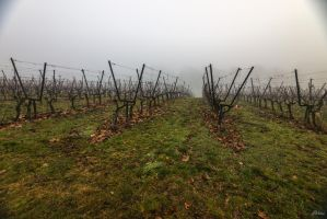 Geneva city - foggy wine yard by Rikitza