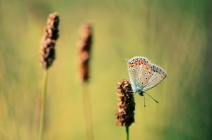 Butterfly by corsuse