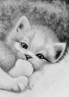 Kitten almost sleeping by titol87